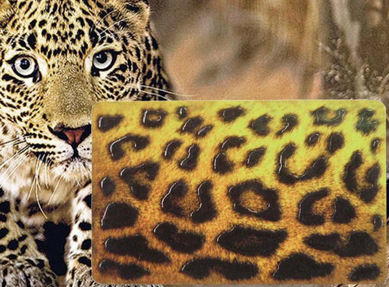 Strukturlack Leopard.jpg